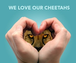 On Mutual Admiration Day, Here is Just Why I Love My Students and Everyone a Part of My Cheetah Team