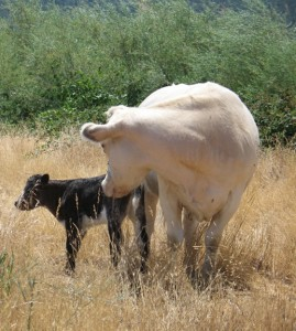 The Baby from a Red Bull and A White Cow - Mom Opt's In By Nature, Dad Opt's Out by Technology