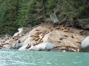Yeah this many sea lions in one location is impressive, but you'd have to study them long and hard to distinguish one from another.  Make yourself stand out from the crowd.