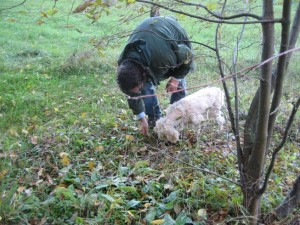 Francesco and his truffle hunting dog Leah.  She likes to eat them - expensive dog treat at $150 per pound.